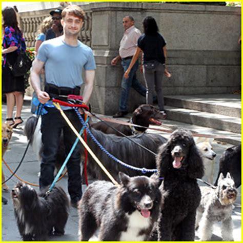 daniel radcliffe dogs daniel radcliffe handles dogs on nyc trainwreck set daniel radcliffe