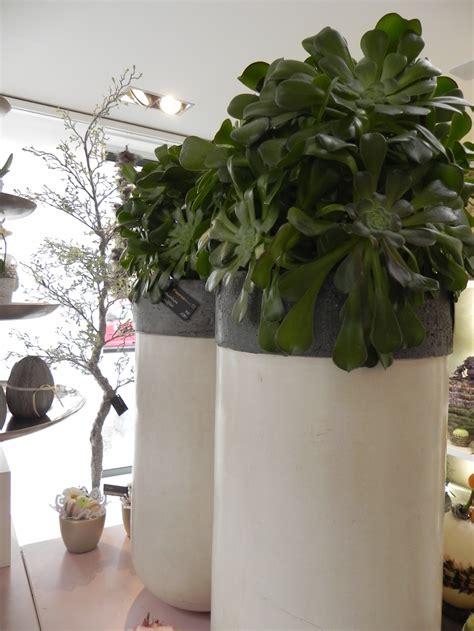 pflanzen shop exotische pflanzen shop exotische pflanzen kaufen