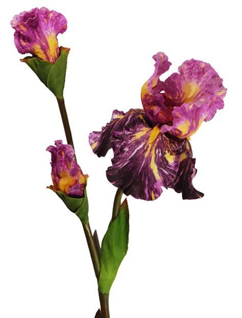 fiore di giaggiolo composizione eremorus e giaggiolo fiori e piante