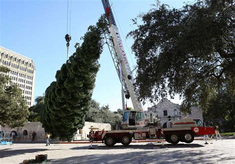 photos 55 foot christmas tree erected at alamo plaza