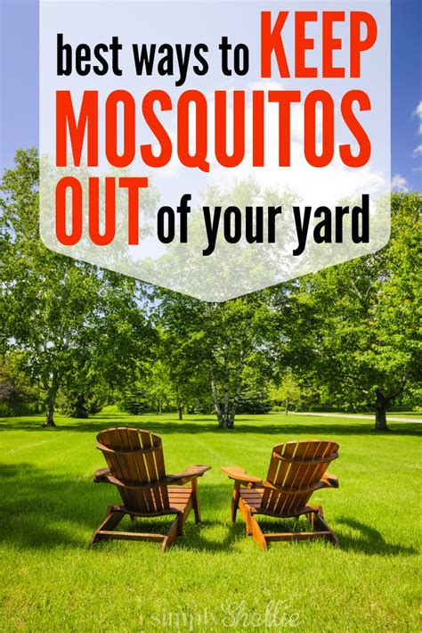 how to rid backyard of mosquitoes how to keep mosquitos out of your yard this summer