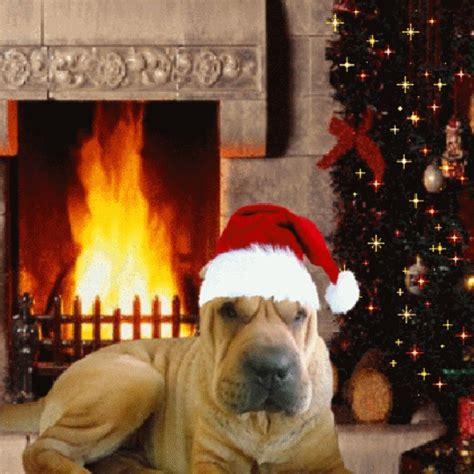imagenes para whatsapp animales imagenes gif de perros navide 241 os para whatsapp imagenes