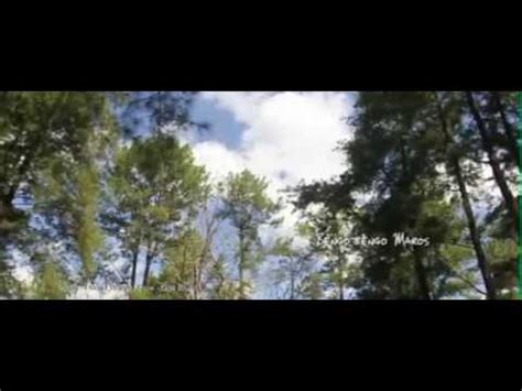 film romantis pendek film pendek hutan romantis di sulsel youtube