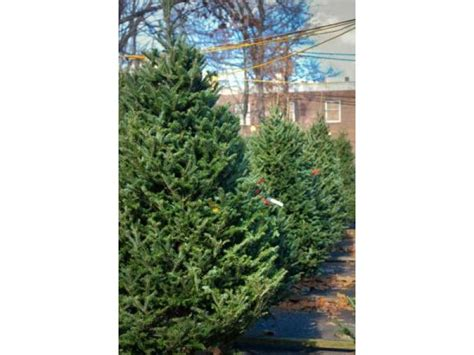 ridgewood y to begin selling christmas trees friday patch