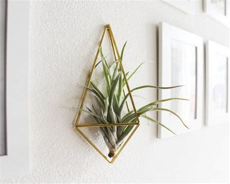 air plant wall holder himmeli fig 3 wall sconce brass air plant holder