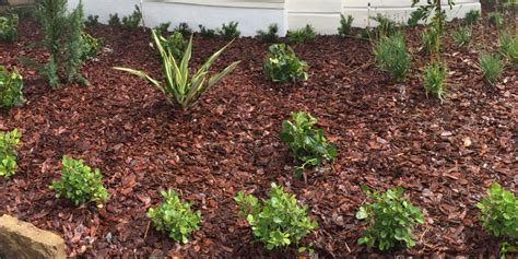 Landscape Rock Mulch Mulch Vs Rock For Landscaping Ground Cover Pink And Green