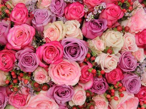 imagenes de flores bonitas para portada significado de las rosas seg 250 n su color fotos alfa radio