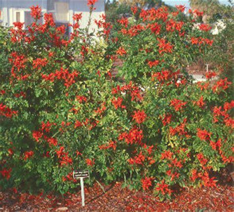 High Heat Plants outstanding coastal planats