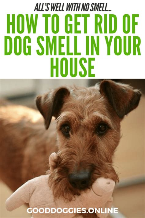 how to get rid of house odors how to get rid of dog smell in the house all s well with