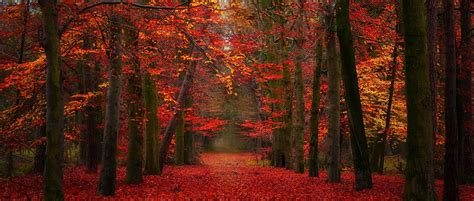 Red Autumn Forest Wallpaper Loading