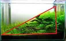membuat slope aquascape angelfish aquascape panduan untuk aquascaping