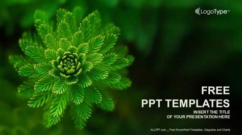 templates for powerpoint free download nature water plant nature powerpoint templates