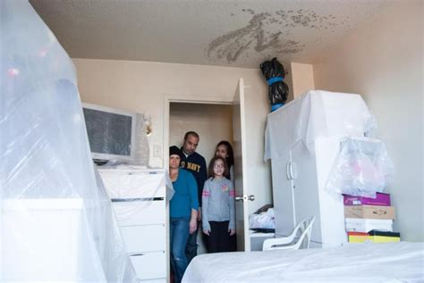 stop mould in bedroom nycha moved family after hurricane then hit by mold ny