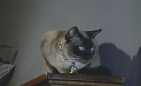 Bell Book And Candle Pyewacket by Bell Book And Candle 1958 Cinema Cats