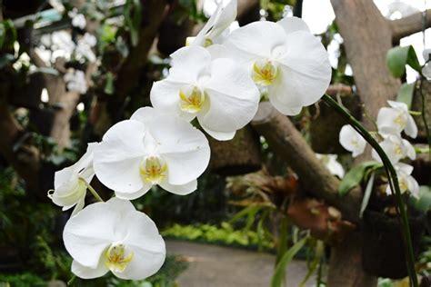 Bibit Anggrek Kebun Raya Bogor traveling ala panda the orchid house bogor