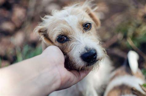 woodrock animal rescue npo gauteng south africa home