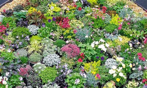 pflanzen für trockene sonnige standorte steingarten stauden mix groupon