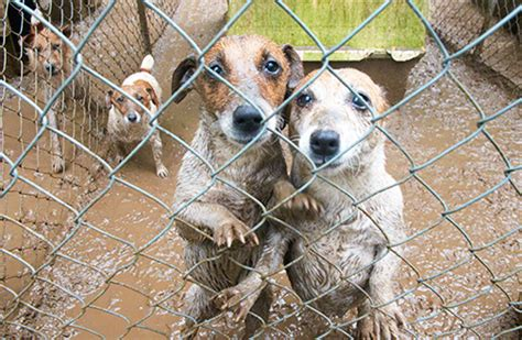 are puppy mills a closer look at puppy mills aspca