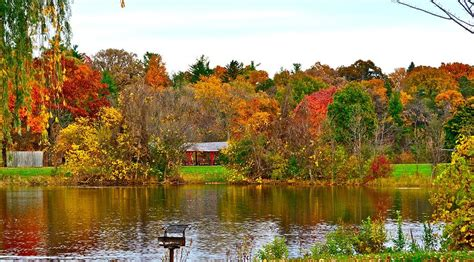of michigan colors fall colors in arbor photograph by shaivi divatia
