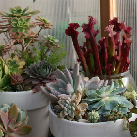 Succulent Container Garden Ideas Succulent Ideas Container Gardening Pinterest Succulent Ideas Succulent Containers And