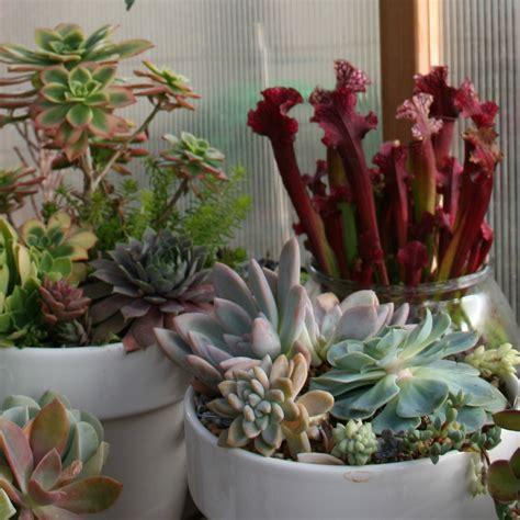 Succulent Container Garden Ideas Succulent Ideas Container Gardening