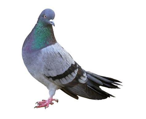 come cucinare il piccione kevin the ultimate one direction fan slang dictionary