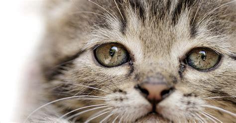 lead poisoning in dogs lead poisoning in dogs and cats