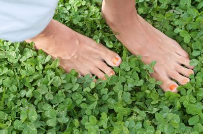 grass alternatives for backyards landscaping landscaping ideas grass alternatives