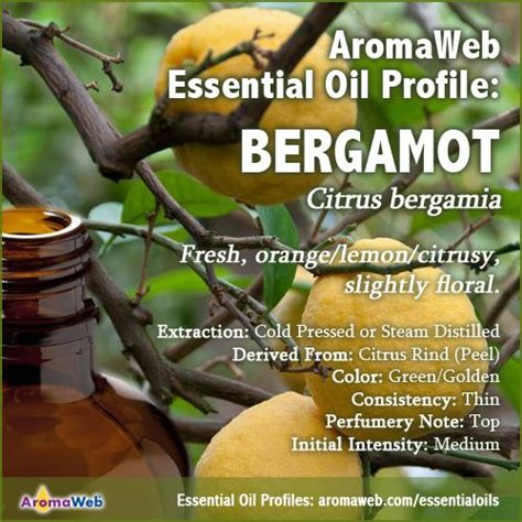 A Brief Profile Of A Few Essential Oils 41 best essential and absolute profiles images on