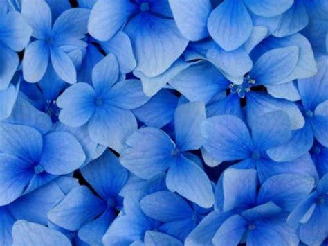 sfondi fiori per cellulari sfondi per cellulare macro fiori 41115