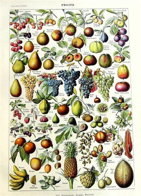 Keset Kaki Printing Fruits Berkualitas 17 best images about antique fruit print on cherry fruit vintage and antiques