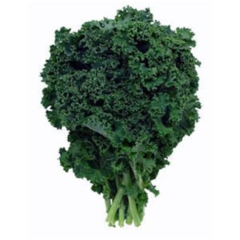 can dogs eat kale can i give my kale is kale or bad for dogs