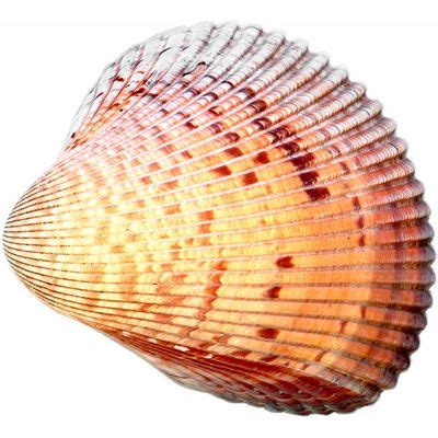 L Shells by Shell Meaning Of Shell In Longman Dictionary Of