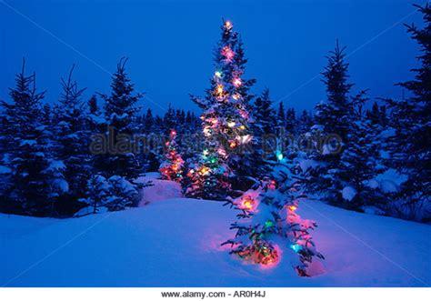 forest original christmas tree decorated tree forest stock photos decorated tree forest stock