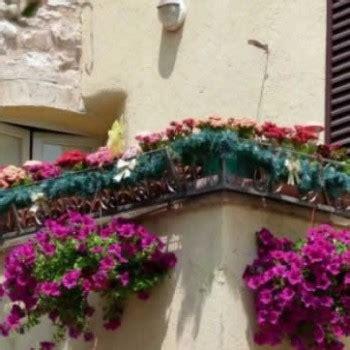 fiori per terrazzo fiori e piante per balconi e terrazzi a fiorilandia