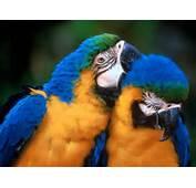 Parrots The Most Colorful Birds