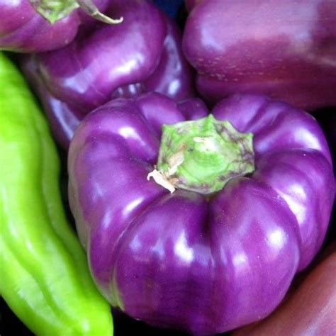 5 tips for kitchen gardening the purple turtles 8 best types of peppers images on pinterest spice