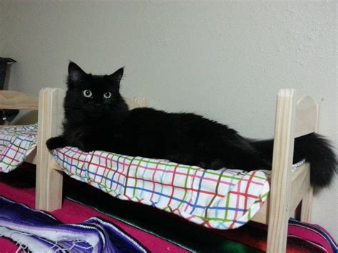 cats   doll beds  created