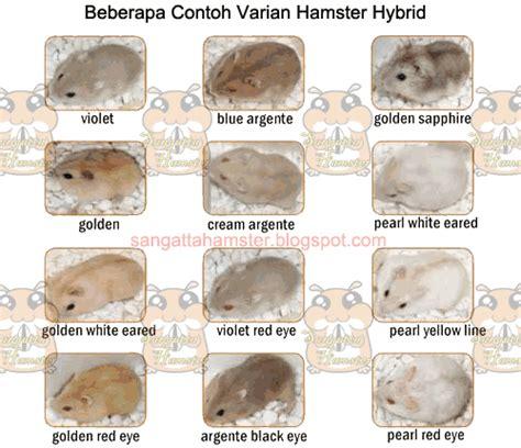 varian hamster hybrid lanamm
