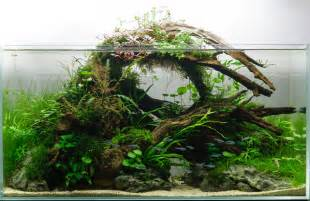 Aquascape Style Iwagumi Aquascape Related Keywords Iwagumi Aquascape
