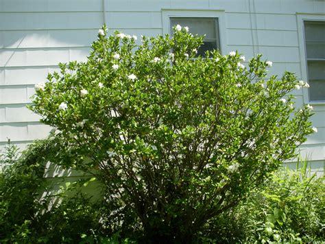 Planter En Juin by Quels Sont Les Arbustes 224 Planter En Juin