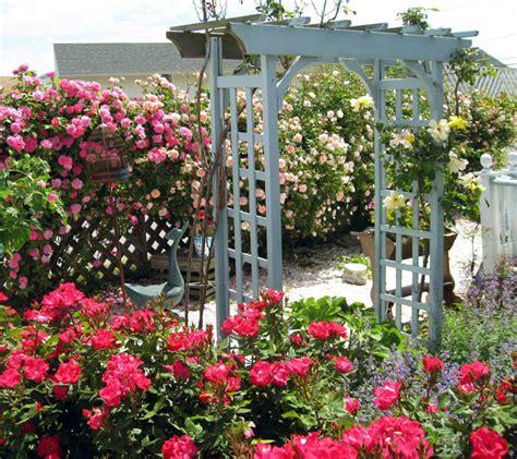 puteri manja pokok bunga ros