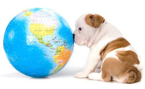 international puppy day international day animalblog
