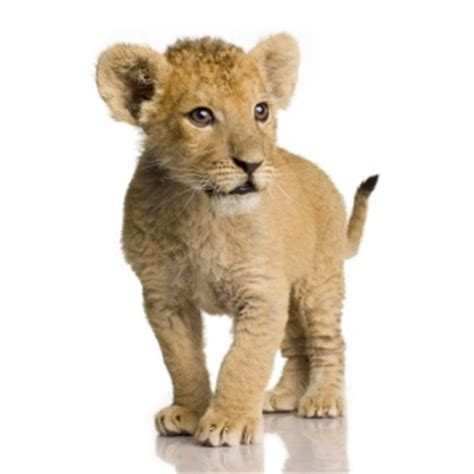 imagenes de animales no conocidos animales carn 237 voros ejemplos y caracter 237 sticas