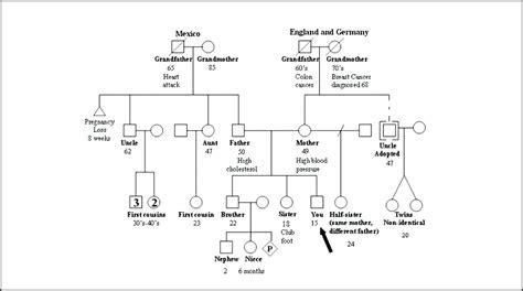 basic genogram template basic genogram template