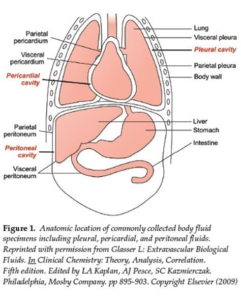 Blood In Stool After Running by 93 Stomach Crs And Blood In Stool Blood In Stool