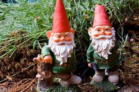 garden gnome gnomes and grasshoppers the squash life blog
