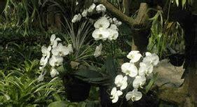 budidaya tanaman hias bunga anggrek konsep