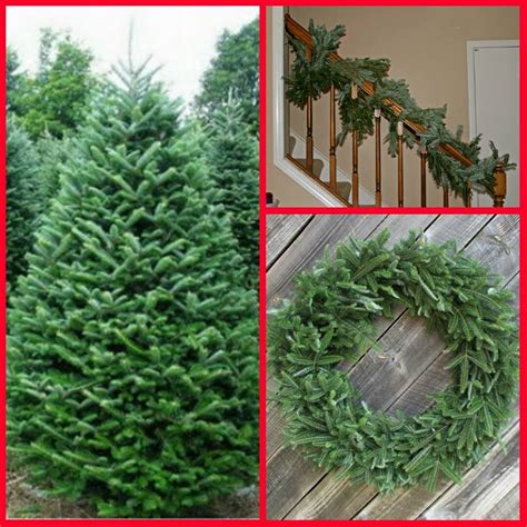 100 cut your own christmas tree illinois learn with