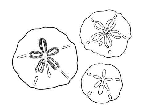 sand dollar coloring sheet coloring pages